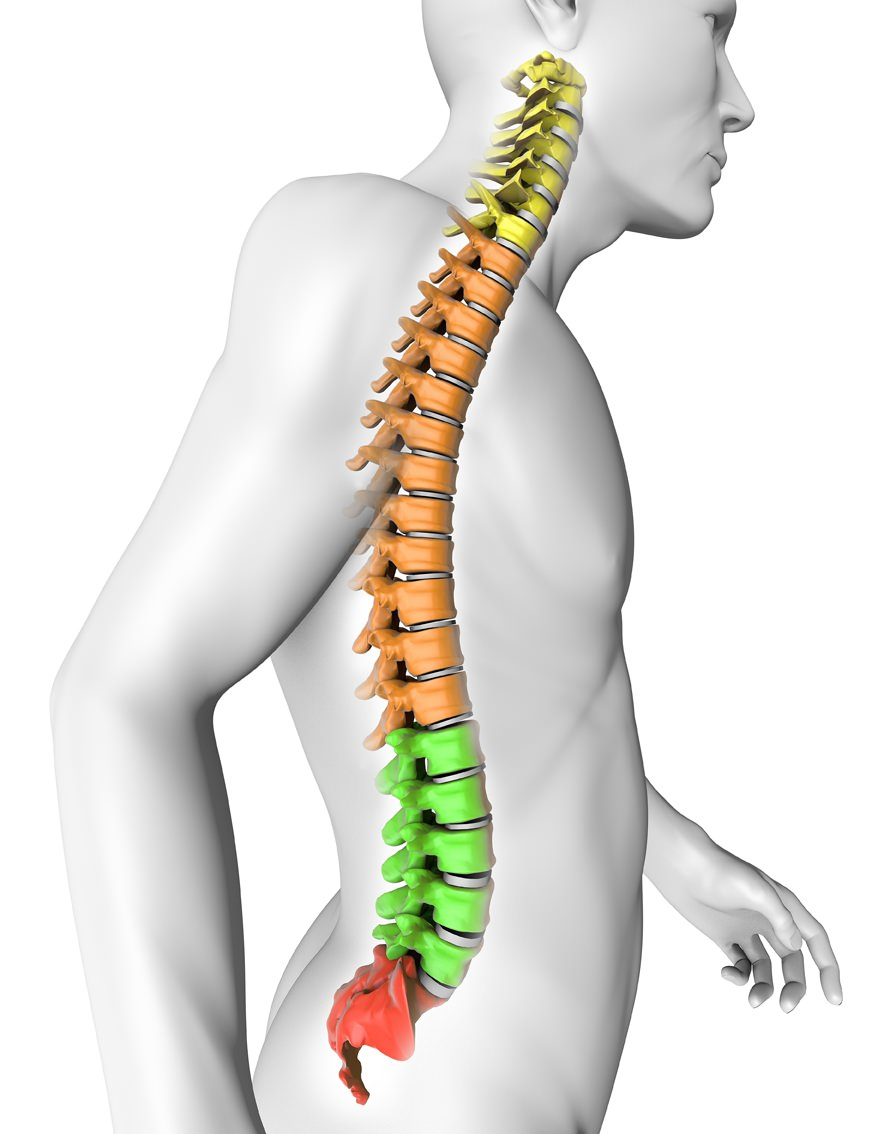 Il mal di schiena: perché e come trattarlo