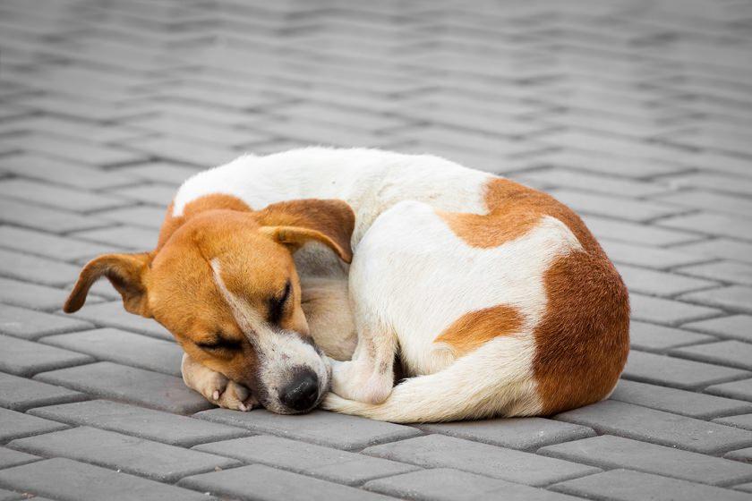 Custodia dell'animale e responsabilità