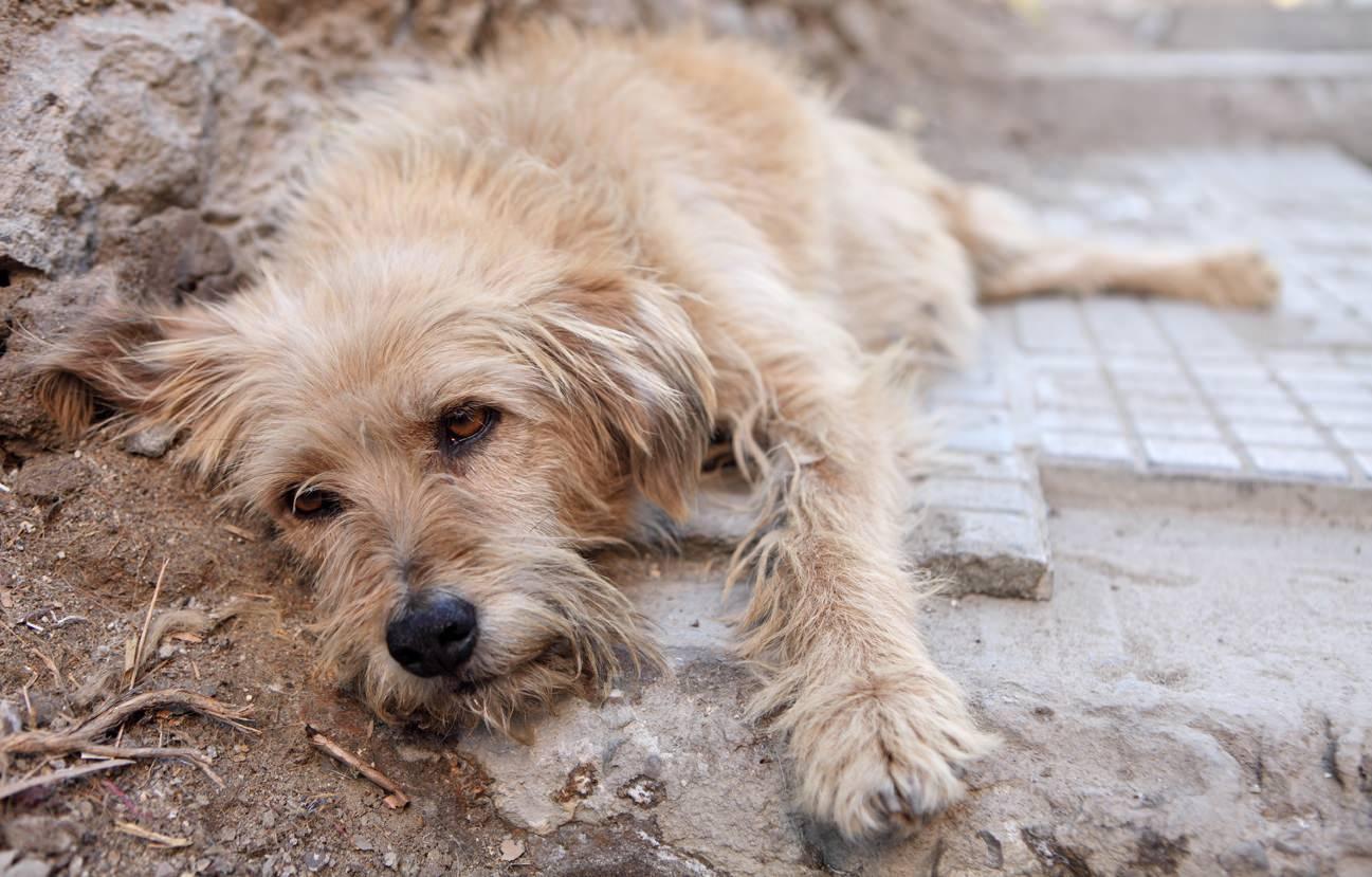 Animale domestico: danno morale in caso di morte