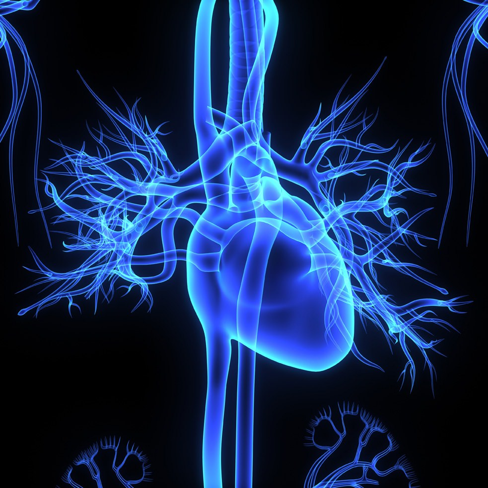 Cardiopatie: l'identikit del malato di cuore