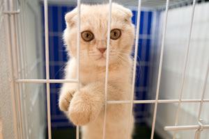 Come è punito chi maltratta o uccide un animale?