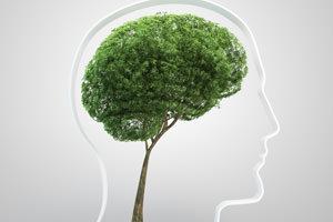 La capitozzatura...un danno per gli alberi