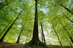 Così gli alberi salveranno le città